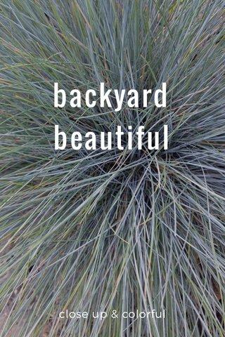 backyard beautiful close up & colorful