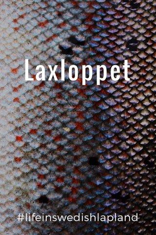 Laxloppet #lifeinswedishlapland