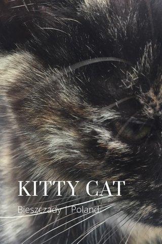 KITTY CAT Bieszczady | Poland