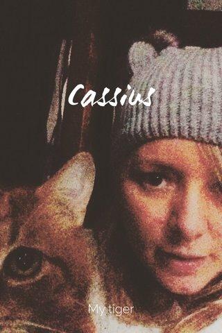 Cassius My tiger
