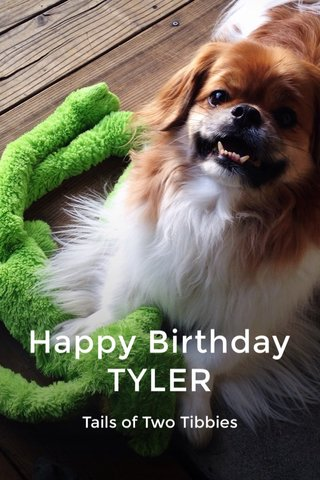 Happy Birthday TYLER Tails of Two Tibbies