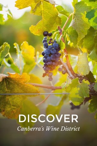 DISCOVER Canberra's Wine District