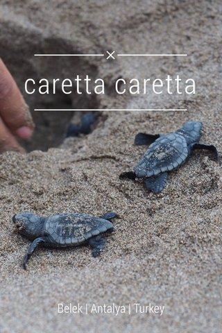 caretta caretta Belek | Antalya | Turkey
