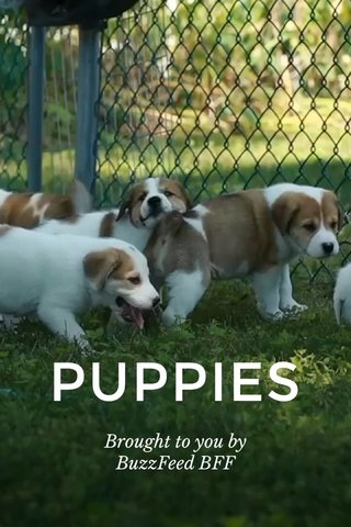 PUPPIES Brought to you by BuzzFeed BFF