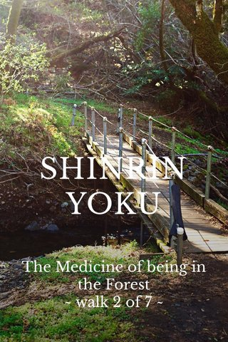 SHINRIN YOKU The Medicine of being in the Forest ~ walk 2 of 7 ~