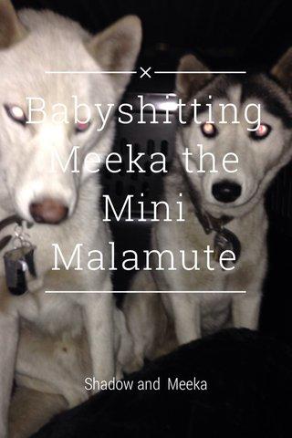 Babyshitting Meeka the Mini Malamute Shadow and Meeka