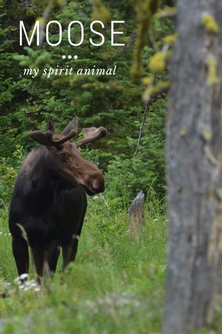 MOOSE ••• my spirit animal