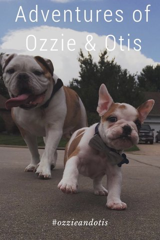 Adventures of Ozzie & Otis #ozzieandotis