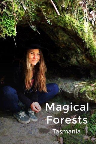 Magical Forests Tasmania