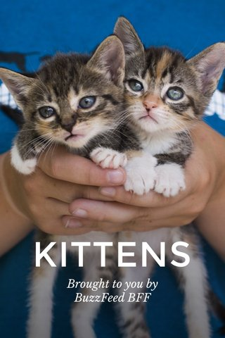 KITTENS Brought to you by BuzzFeed BFF