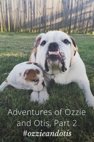 Adventures of Ozzie and Otis, Part 2 #ozzieandotis