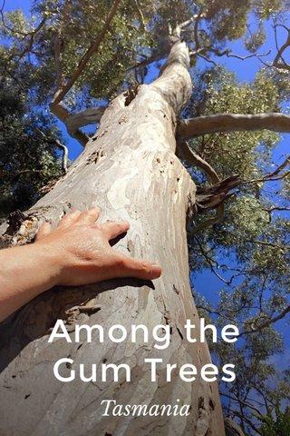 Among the Gum Trees Tasmania