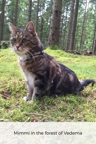 Mimmi in the forest of Vedema