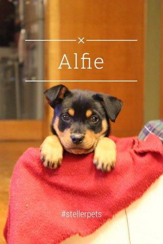 Alfie #stellerpets