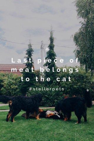 Last piece of meat belongs to the cat #stellerpets