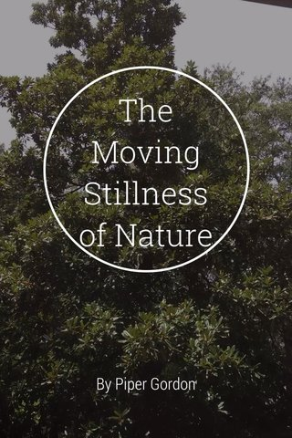The Moving Stillness of Nature By Piper Gordon