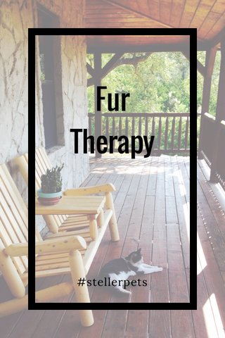 Fur Therapy #stellerpets
