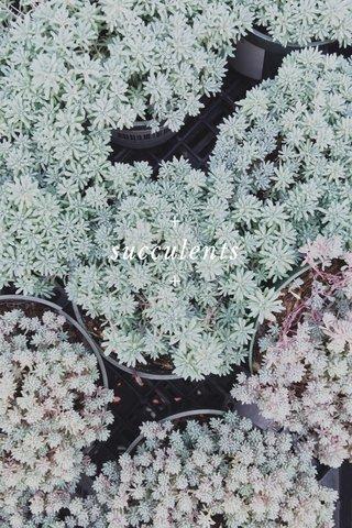 + succulents +