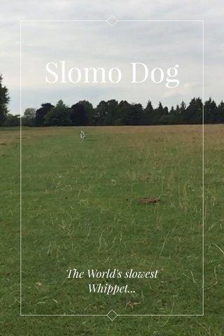 Slomo Dog The World's slowest Whippet...