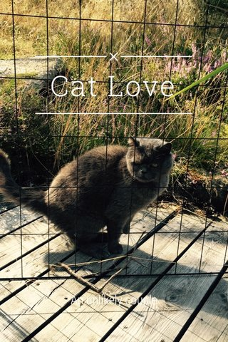 Cat Love An unlikely couple