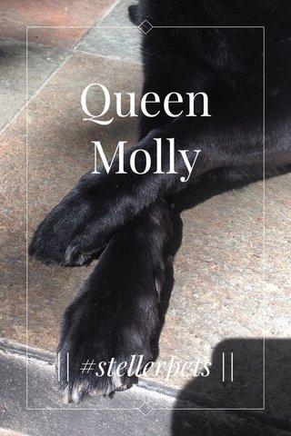 Queen Molly    #stellerpets   