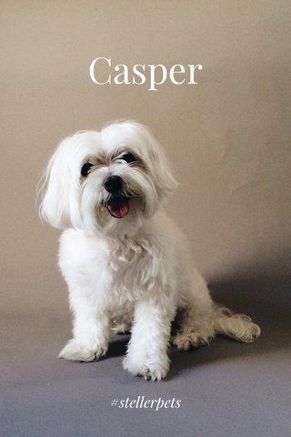 Casper #stellerpets