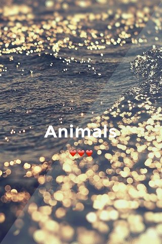 Animals ❤️❤️❤️