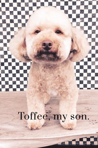 Toffee, my son.