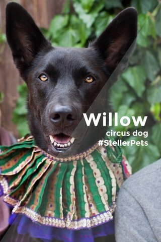 Willow circus dog #StellerPets