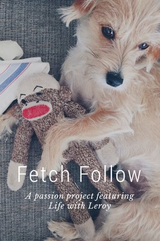 Fetch Follow A passion project featuring Life with Leroy