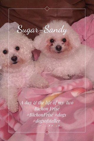 Sugar-Sandy A day & the life of my two Bichon Frisé #BichonFrisé #dogs #dogsofsteller #nationaldogday