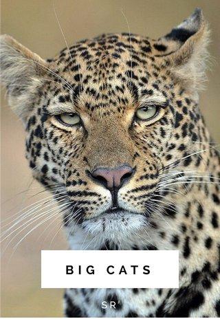 BIG CATS SR