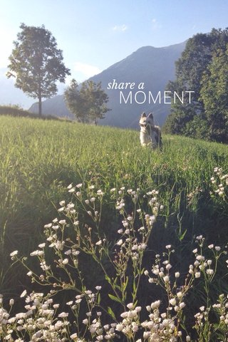 MOMENT share a