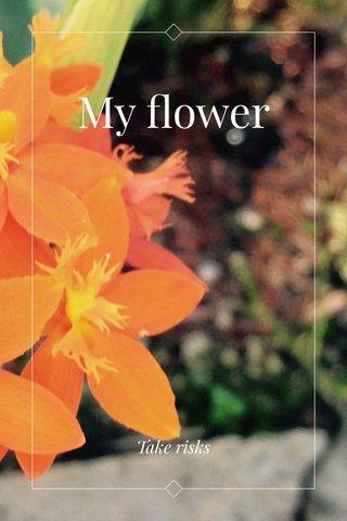 My flower Take risks
