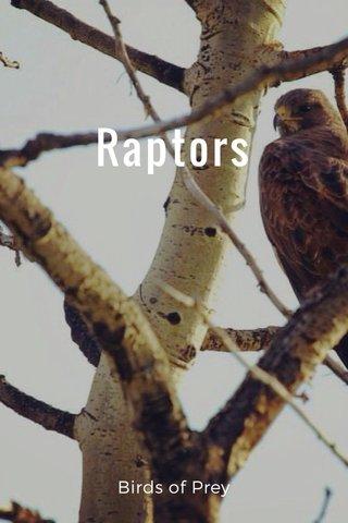Raptors Birds of Prey
