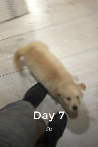 Day 7 Sit