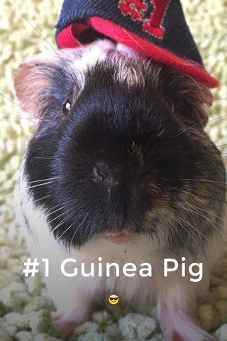 #1 Guinea Pig 😎