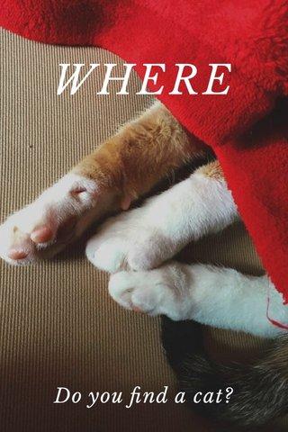 WHERE Do you find a cat?