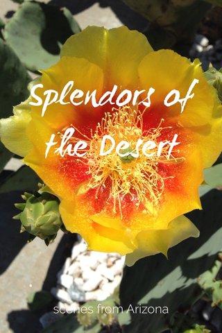 Splendors of the Desert scenes from Arizona