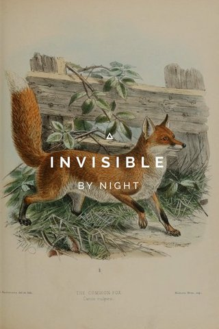 INVISIBLE BY NIGHT