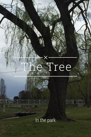The Tree In the park