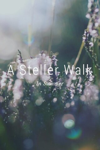 A Steller Walk In Summer