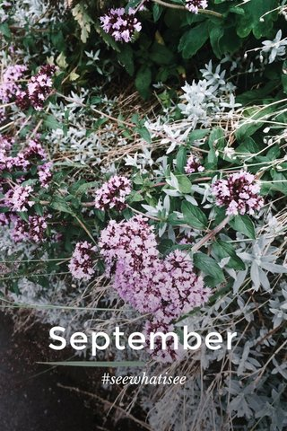 September #seewhatisee