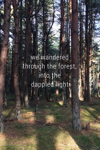 we wandered through the forest, into the dappled light