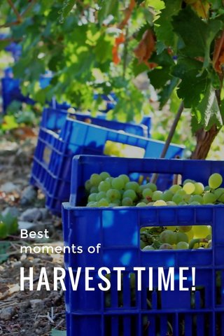 HARVEST TIME! Best moments of