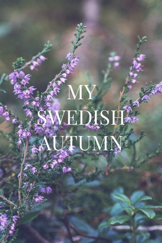 MY SWEDISH AUTUMN