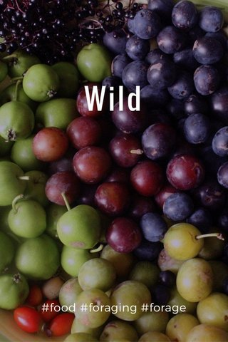 Wild #food #foraging #forage