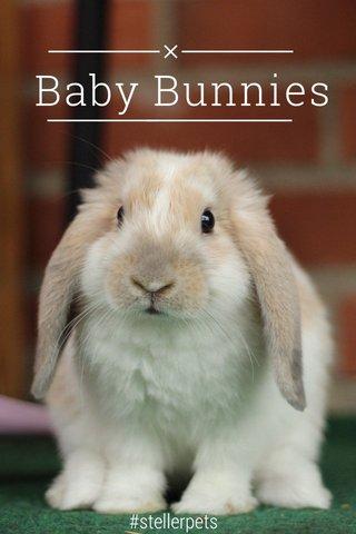 Baby Bunnies #stellerpets
