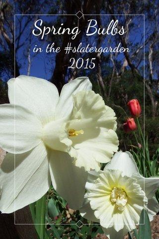 Spring Bulbs in the #slatergarden 2015