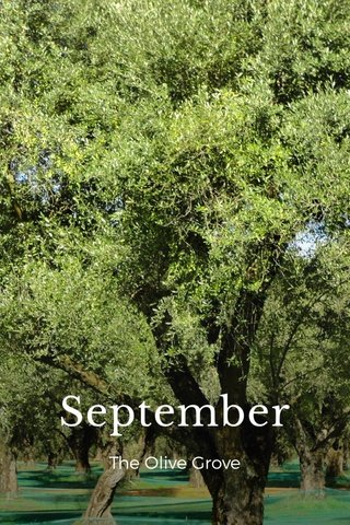 September The Olive Grove